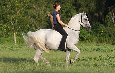 Karen Rohlf riding Monty