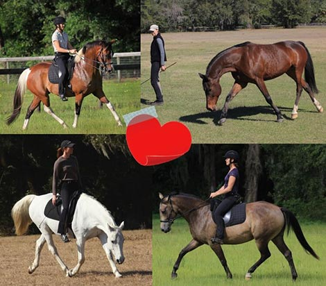 Join the Dressage Naturally Video Classroom